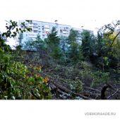 На Макаренко уничтожают лес
